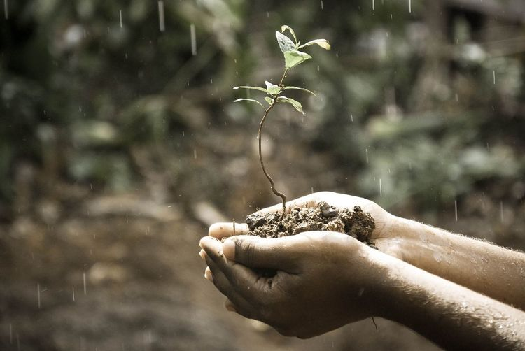 Cropped hands holding plant during rainfall