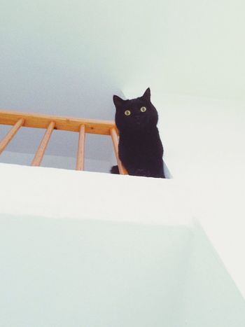 Back again !? 😺😼 Cats Of EyeEm EyeEm Best Shots One Animal Animal Themes Majestic Meow Pets Cats Black Indoors  Photography View Kitty Looking At Camera See What I See Feline Domestic Animals White Black Cat Cute Serious Foto New Portrait Daily Life