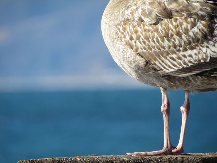 Low Section Of Seagull Perching On Rock