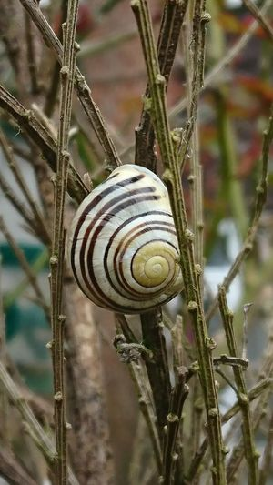 Snail Closeup Snail Photography Plant Nature Close-up Growth No People Outdoors Day Tree Spiral Pattern Eyem Best Shots Nature_collection Xperiaphotography Xperiaxzcam Xperiaxz