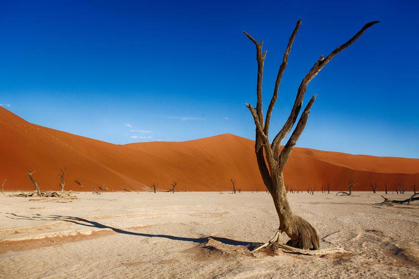 Arid Climate Bare Tree Beauty In Nature Dead Plant Desert Desert Landscape Nature Palette Sand Sand Dune Scenics Sossusvlei Tranquil Scene Tranquility Tree