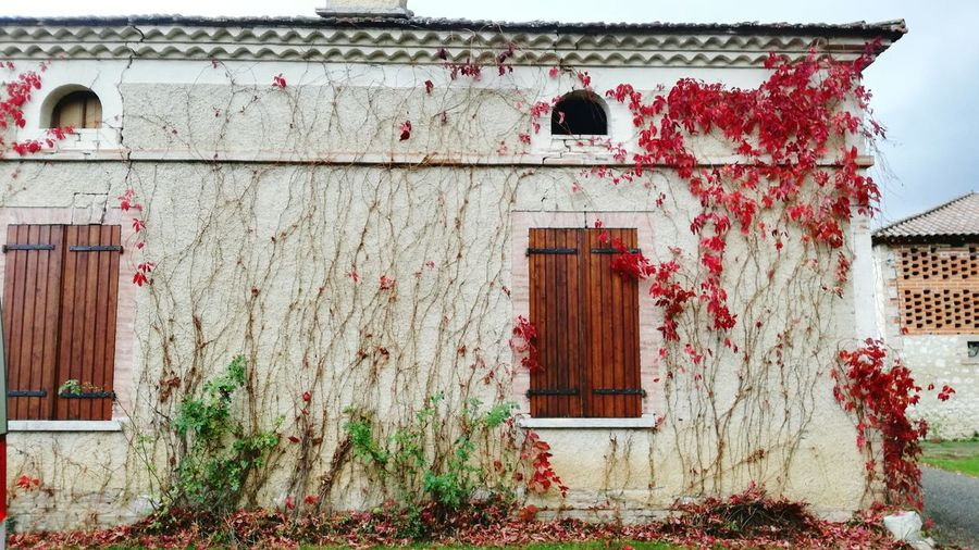 Architecture Building Exterior Built Structure Door Entrance Outdoors Day Ivy Façade Window Red Plant No People Growth France Occitane Nature Beauty In Nature Wall Art