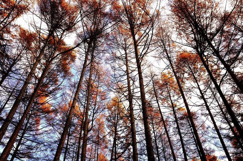 Nagano Japan 静寂 怖い位に静寂に包まれた山中。聞こえるのは自分の息遣いと、空腹を知らせるお腹の音だけ???