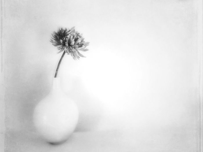 Cultivating Space... AMPt_community Shootermag Conceptual Spiritual Buddhism EyeEm Bnw Blackandwhite