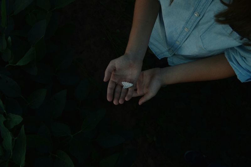 High angle view of young woman hand holding moth at night