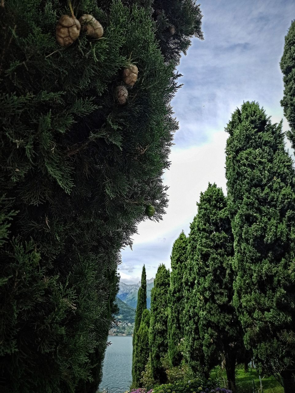 TREES AND PLANTS GROWING AGAINST SKY