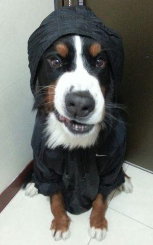 DM? 為什麼要下雨 ☔ …… 害我要穿雨衣散步? ? ?