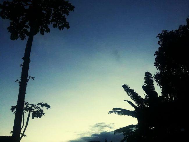 Tree Palm Tree Branch Blue Silhouette Tree Trunk Tree Area Sky