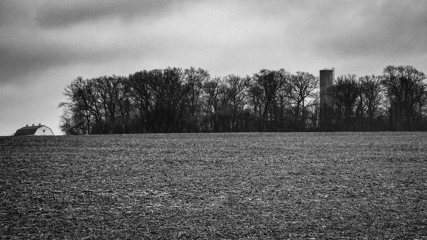 cold rainy corn field Agriculture Atmosphere Bare Tree Black And White Photography Field Landscape Non-urban Scene Outdoors Remote Rural Scene Scenics This Week On Eyeem Tranquil Scene Tranquility Tree