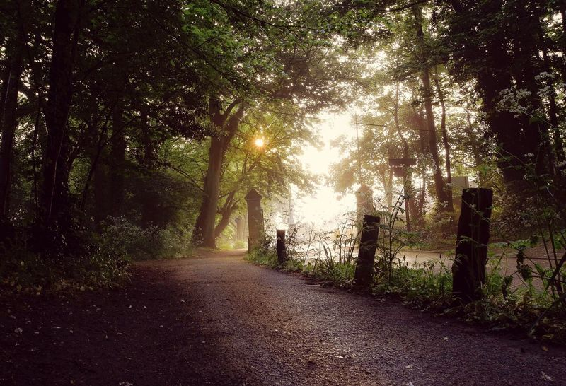 Nonsuch Park Nonsuch Nonsuch Park Surrey Gate Sunrise Spooky Atmosphere Spooky Trees Spooky Misty Misty Morning Path Pathway Park Street The Great Outdoors With Adobe