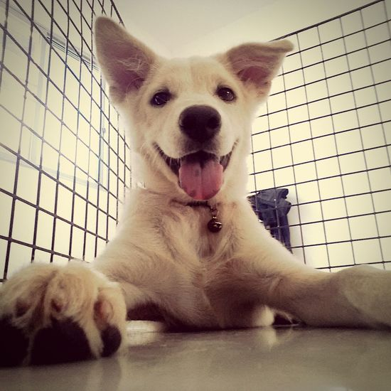 Love me Love my Dog 🐕