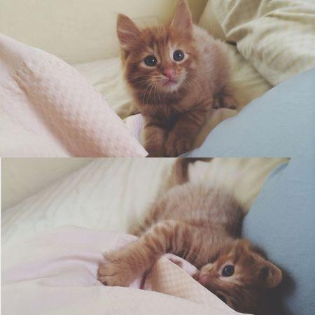 My little baby ❤️ Kitten Adorbs Joey