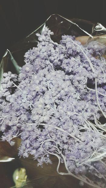 Potato Workshop Preserved Flowers