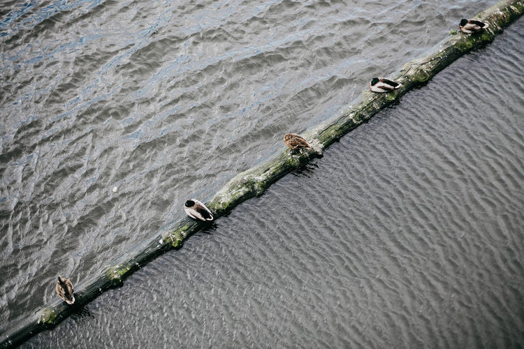 High angle view of bird perching on log over river