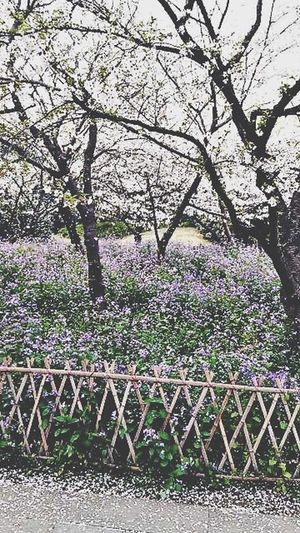 the spring in Hangzhou.