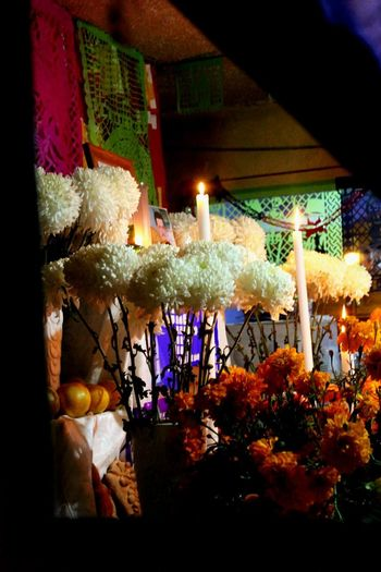 Recuerdos. Night Indoors  Window No People Illuminated Flower Tree Freshness Close-up Arts Culture And Entertainment Mexico Tradicionesmexicanas Tradition Dia De Muertos México Ofrenda Al Dia De Muertos OfrendaFamiliar Celebration