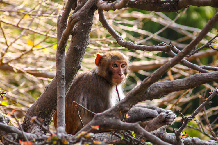 Monkey Monkey In The Tree Animal Themes Mammal Tree Animals In The Wild One Animal Forest Primate Sitting Outdoors Animal Wildlife Nature Portrait No People Ape Branch Day