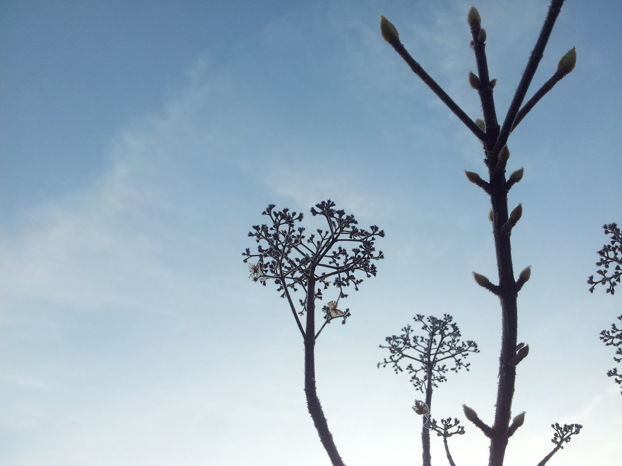 tree, nature, branch, beauty in nature, low angle view, sky, no people, outdoors, day, growth, bare tree, flower, close-up