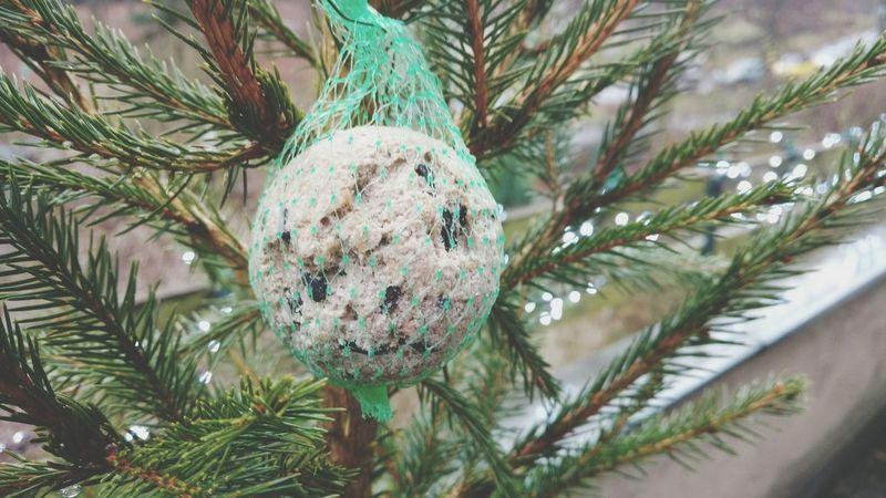 Tree Christmas Christmas Tree No People Green Color Branch Nature Outdoors Close-up Needle - Plant Part Day Christmas Decoration TitmiceNeedle Winter Bokeh Photography BokehliciousNeedles Fir Bokeh Meisenknödel Titmouse Dumplings Dumpling  Pine Tree