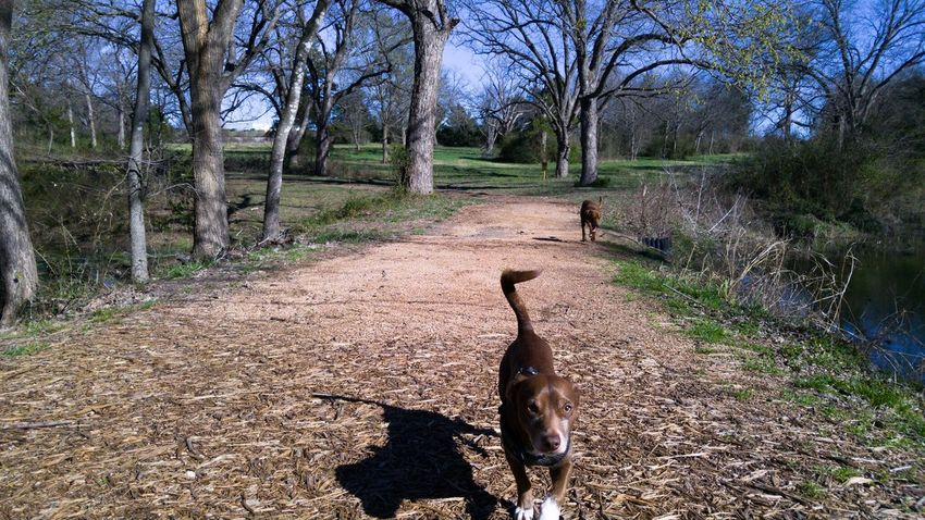 Both my boys Luke and Jake Dogs Dog Pets Pet Park Nature Trees Walking