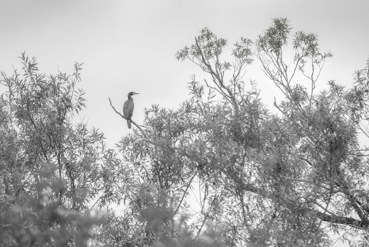 Animal Animal Themes Animal Wildlife Animals In The Wild Beauty In Nature Bird Branch Cormorant  Day Flying Living Organism Nature No People One Animal Outdoors Southern Germany Tree