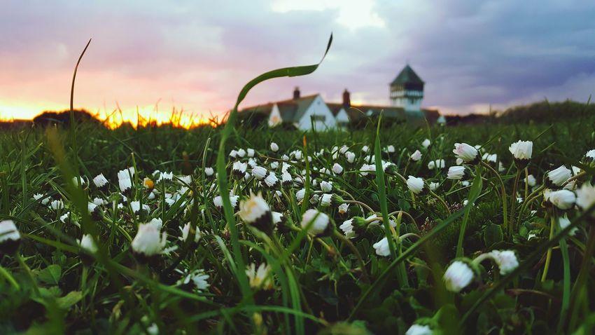 The Essence Of Summer Summer Sunset Flowers Beautiful Nature