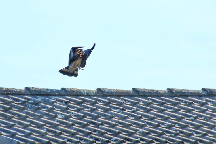 Low angle view of seagull on roof against clear sky