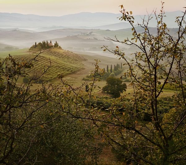 Val d'Orcia Wine Chianti EyeEm Tuscany Italy ShotOnIphone Tranquility Beauty In Nature Scenics - Nature Landscape Nature No People Non-urban Scene Field Outdoors