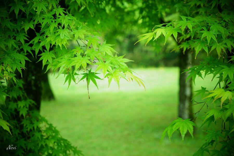 瞳に優しく… Rain Rainy Days Green わちゃわちゃ Green Leaves 新緑 From My Point Of View Light And Shadow Taking Photos Hagging A Tree EyeEm Best Shots ボケ味ふぇち Bokeh Bokeh Love EyeEm Nature Lover お疲れさまです(^-^ゞ💚