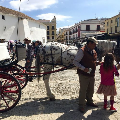 """City life with an rural country """"taste"""". Beautiful spanish horses to enjoy a ride... Buildingstyles Bull Statue Carriage Ride City Life Day Flowers Garden Horses Man And Girl Outdoors People Sky Spanish Horses The Mix Up Travel Destinations Urban Lifestyle Animal Themes in Ronda"""