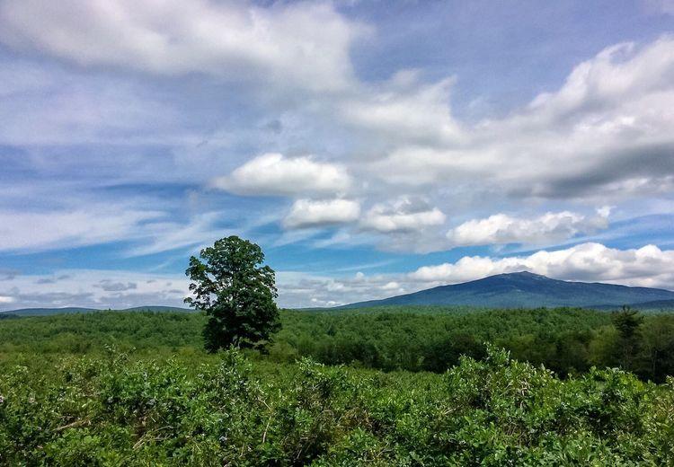 Country vista