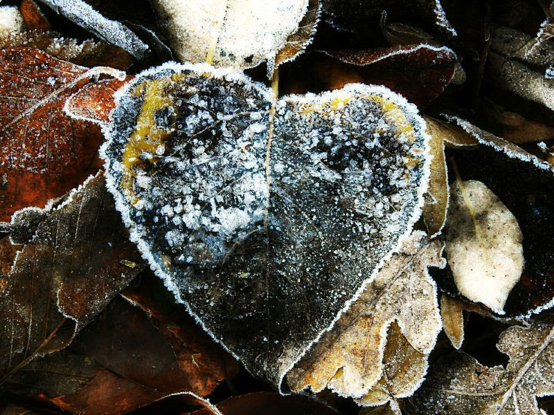 Heart Heart Leaf Heart Shape Frozen Heart  Close-up High Angle View Textured  Nature Hello World Doğa For My Friends That Connect For My Friends For My Followers For My Eyeem Friends EyeEm Gallery Photography Frozen Photography Outdoors Backgrounds Naturelovers Outdoor Photography EyeEm Best Shots Beautiful Nature Photography Nature_collection