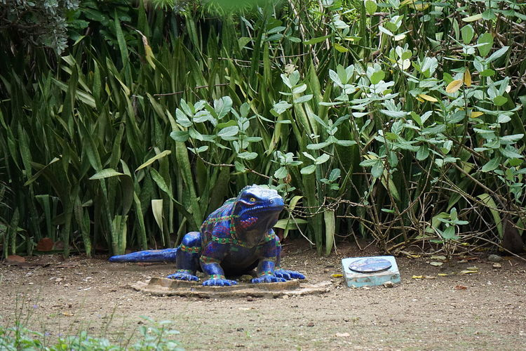 Statue Animal Statue Animal Themes Blue Iguana Grand Cayman Man Made Object No People Reptile