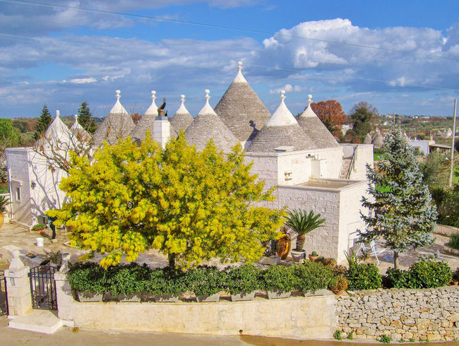 Trulli, traditional old houses with yellow mimosa tree in Puglia, Italy Ancient Puglia Road Rural Wall Architecture Blooming Blossom Contryside Garden Italy Mimosa No People Old Outdoors Spring Stone Tree Trulli Trullo Valle D'itria Yellow