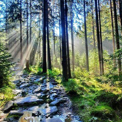 3. PfingstBrockenlauf Sklblog Pfingsten Brocken Trail Trailrunning Ilsenburg