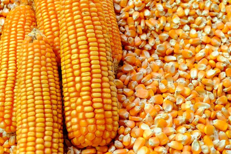 Corn Vegetable
