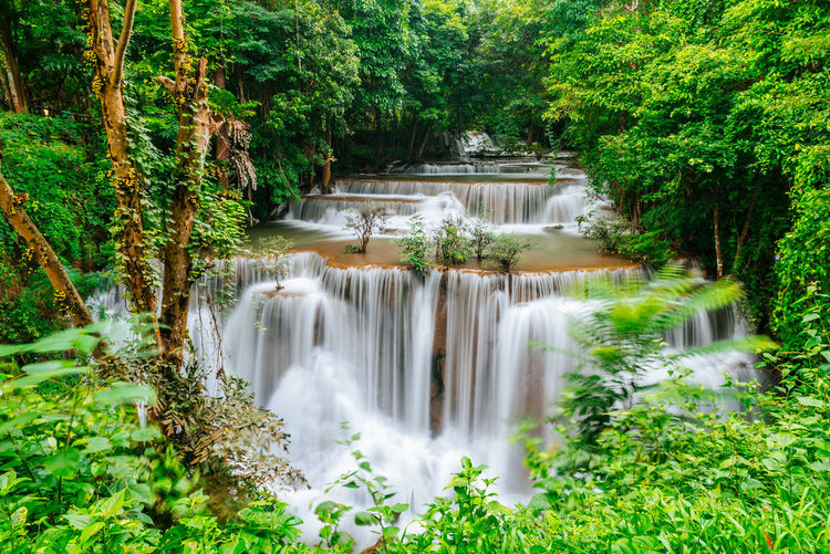 grest waterfall in green forest Tree Water Waterfall Beauty Forest Motion Social Issues Environment Long Exposure Environmental Conservation Rainforest Tropical Tree Tropical Rainforest