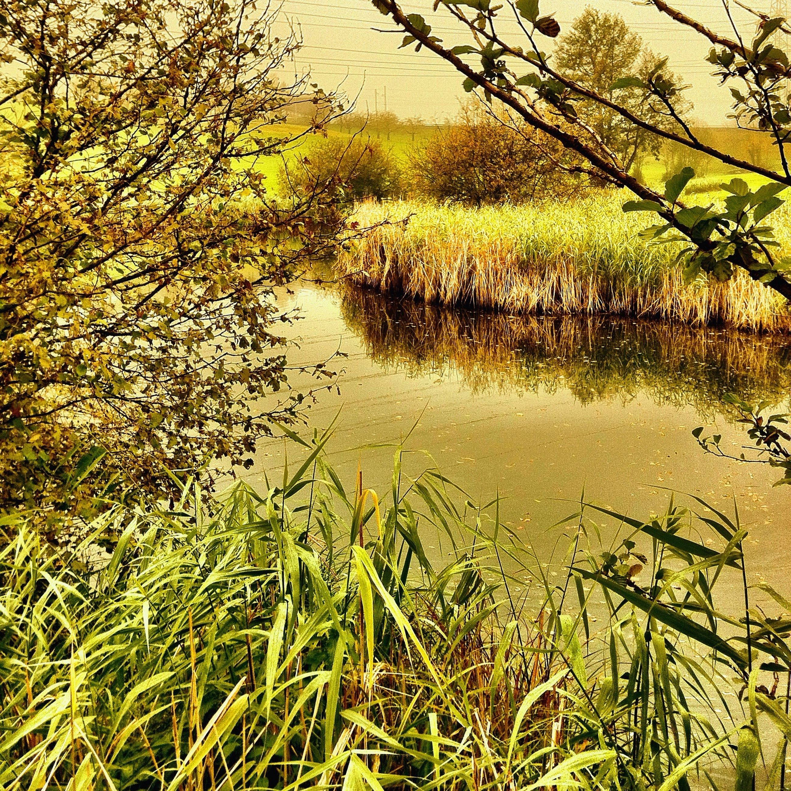 water, grass, lake, growth, tranquility, reflection, plant, nature, tranquil scene, beauty in nature, tree, scenics, green color, river, branch, day, no people, outdoors, lakeshore, idyllic