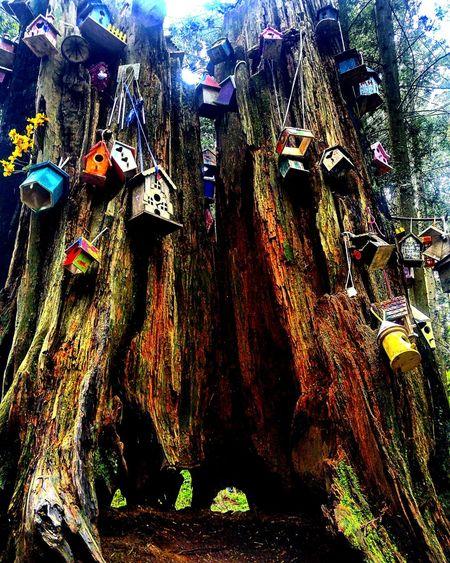 Fairy Fairytale  Fairy Houses Redwood Park