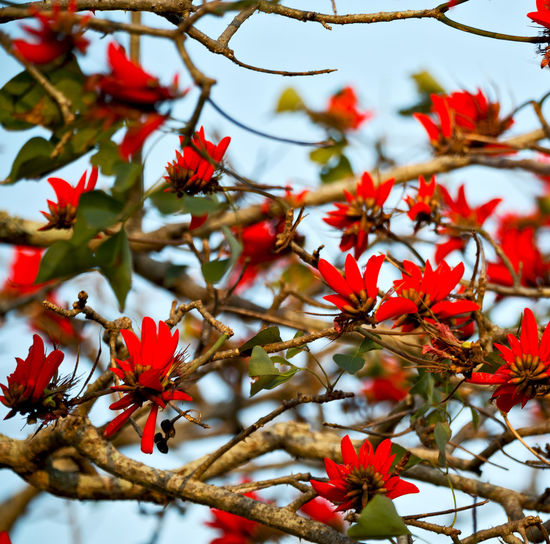 Low angle view of red flowering plant