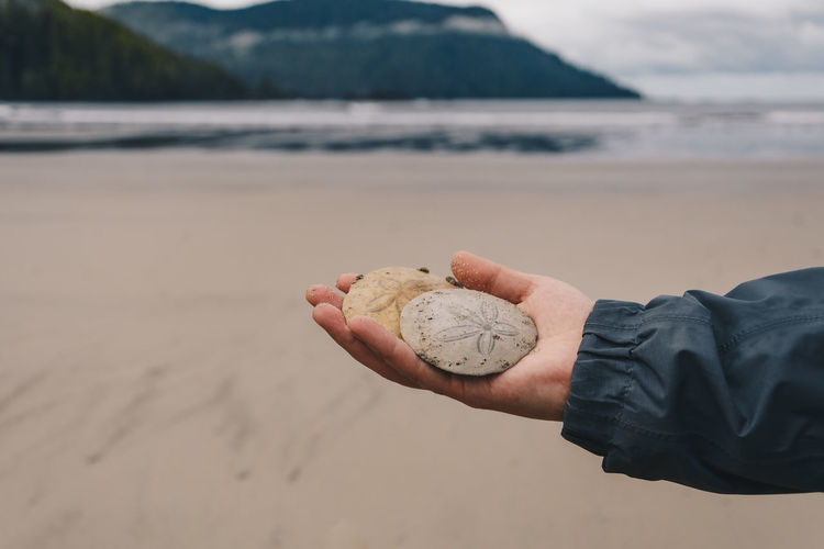 Cropped hand of man holding sand dollars at beach