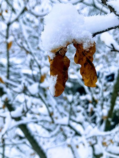 Cold Temperature Snow Winter Weather Frozen Nature Ice
