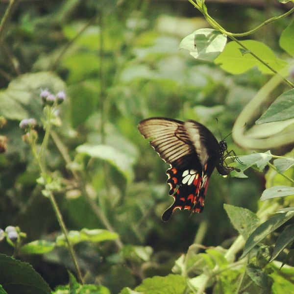 Beautifulmothernature Butterfly ❤ Taking Photos Eye4photography