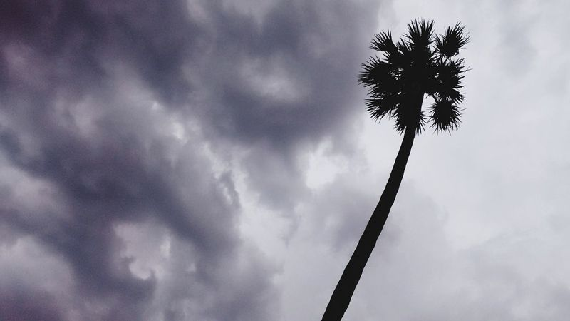 Creepy!!! Storm is comming Cloud - Sky Low Angle View Palm Tree Tree Storm Storm Cloud Thunderstorm Sky No People Nature Outdoors Day Welcome To Black EyeEmNewHere