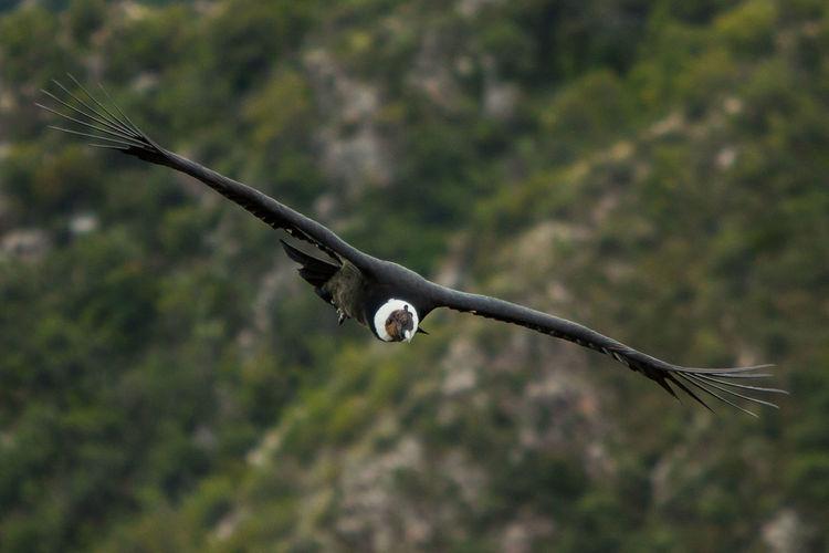 Bird flying against blurred background