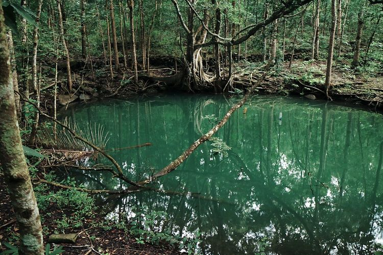 Springs in the middle of the jungle. The Secret Spaces Water Nature Reflection Tree Green Color Beauty In Nature Spring Outdoors Jungle EyeEm Diversity EyeEmNewHere Break The Mold Art Is Everywhere TCPM