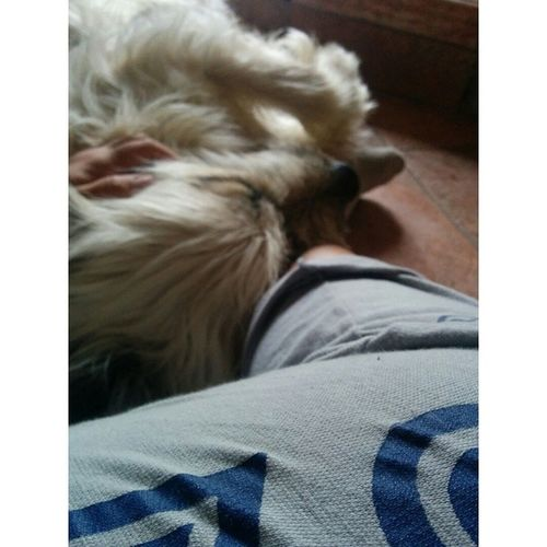 Câlins ?? Nofilter Dog Babylove Monamouur morning likethis hugs toomuchlove helliot