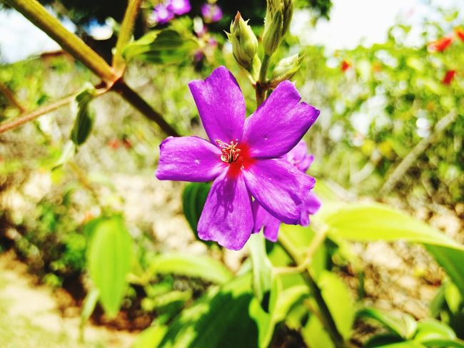 linda flor Flower Nature Plant Growth Beauty In Nature Fragility Outdoors