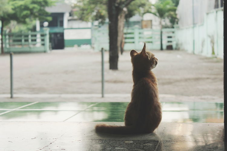 Await Kediri INDONESIA Nature Photography Orange Color Photo Indonesia Photography  Nature Photography Street Photography Streetphotography Life Mood Pets Domestic Cat Sitting Cute Animal Themes Sky Feline Kitten Ginger Cat Stray Animal At Home Persian Cat  Siamese Cat Cat Paw Tabby Cat Maine Coon Cat EyeEmNewHere