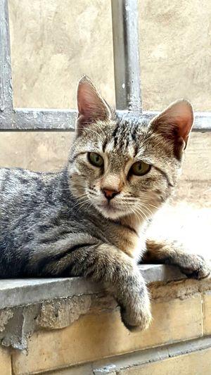 Balcony Guest. Cat Tehran Balcony Animals Portrait Animal Animal Portrait Animal Posing Cat Portrait